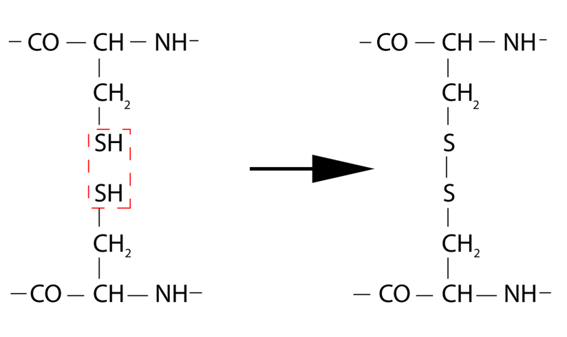 cisteina cistina